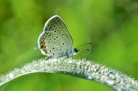 Tiptoe Through The Dewdrops